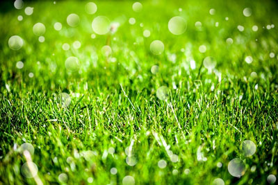 Lawn watering guide colorado springs